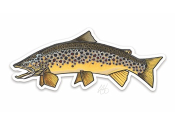 Brown Trout Sticker - Casey Underwood
