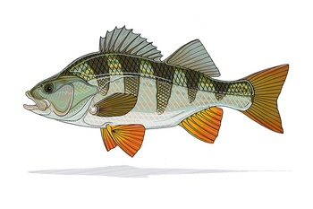 Perch Print - Casey Underwood