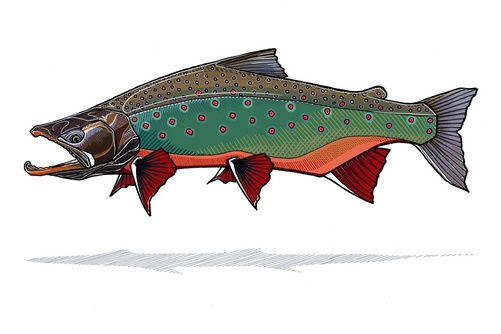 Arctic Char Prints - Casey Underwood Small