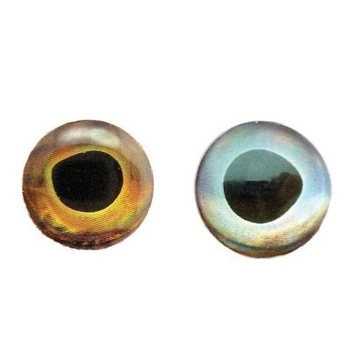 Fish Skull Living Eyes 15mm