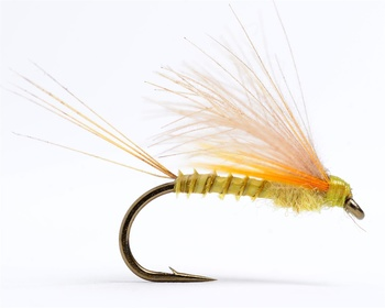 CDC Biot Dun Emerger PMD #14