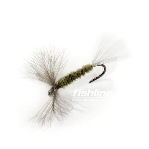 Emerger CDC Olive Strl 14